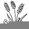 Free Clipart Of Wheat Stalks Image