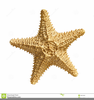 Vintage Starfish Clipart Image