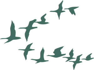 Teal Flock Of Geese Clip Art