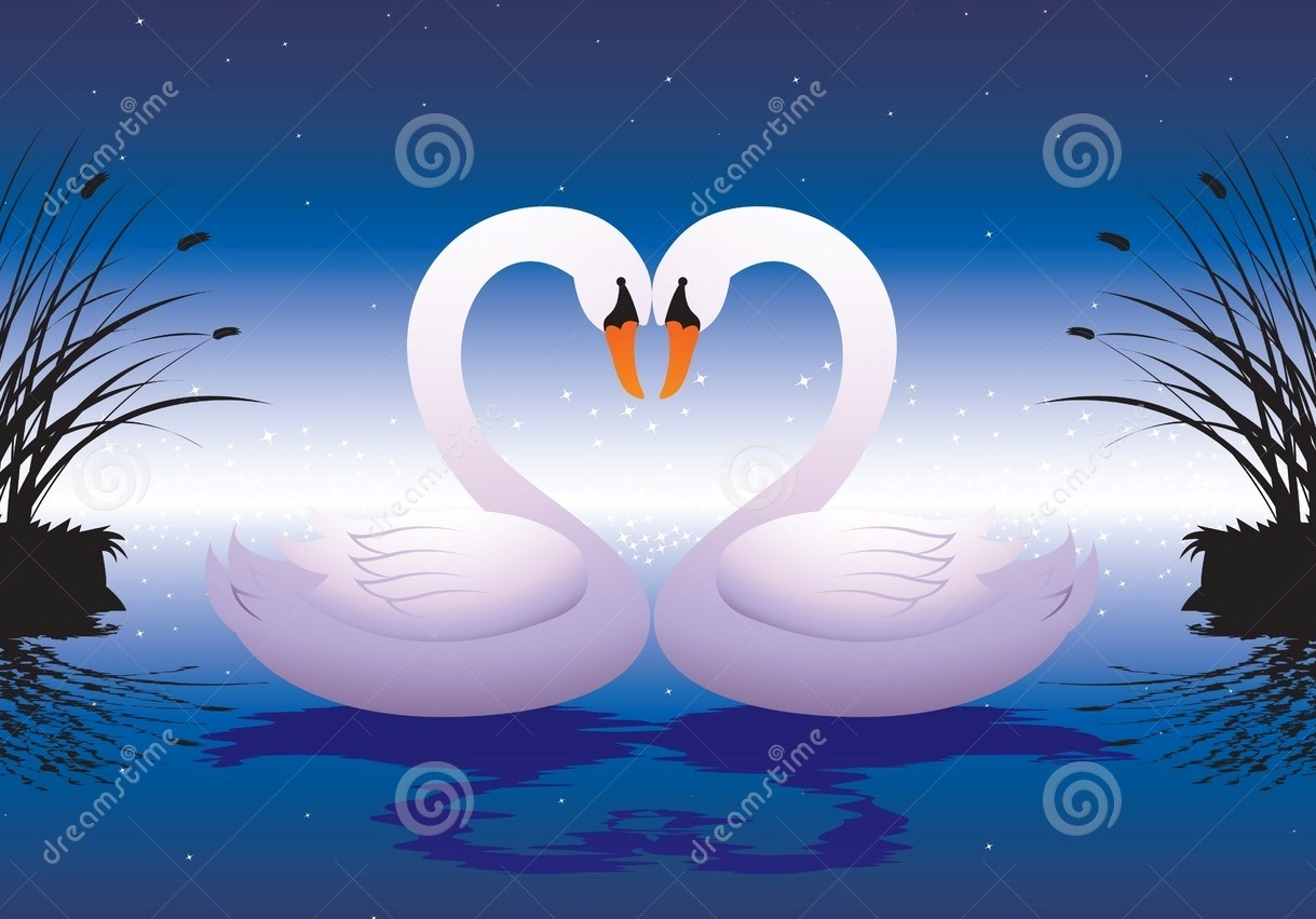 Swans In Love Drawin...