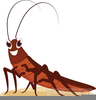 Clipart Cockroach Image