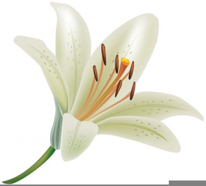 free white lily clipart free images at clker com vector clip art rh clker com lily clip art border lily clipart black and white