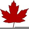 Maple Leaf Clipart Image