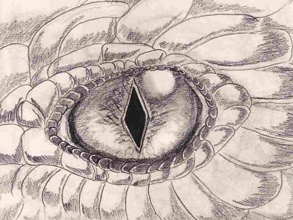 Dragon Eye Free Images At Clker Com Vector Clip Art