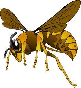 Brown Yellow Hornet Clip Art
