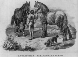 English Steinkohle Horse Image