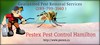 Pestex Pest Control Hamilton Offer Services Image