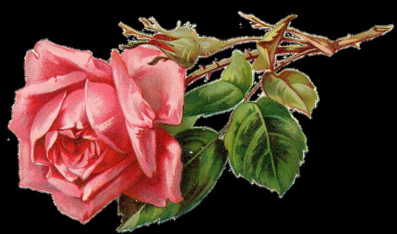 Chambre Vintage Rose – Raliss.com