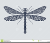 Free Clipart Of A Dragonfly Image