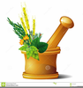 Mortar Pestle Clipart Image