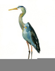 Blue Heron Cliparts Image