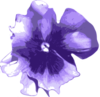 Flower Pansies Purple Image
