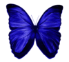 Edited By C-freedom Blue Butterfly Image