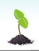 Plant Growing Clipart Image