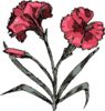 Carnation Illustration With Color Clip Art