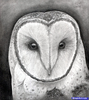 Owl Head Drawing Image