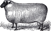 Free Primitive Sheep Clipart Image