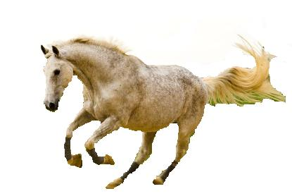 Click Stars To Rate Running Horse Png