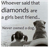 Dog Lover Quotes Image