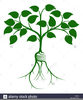 Tree Growing Clipart Image