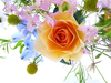 Free Flower Wallpaper For Desktop Beautiful Flowers Image