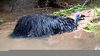 Cassowary Injury Image