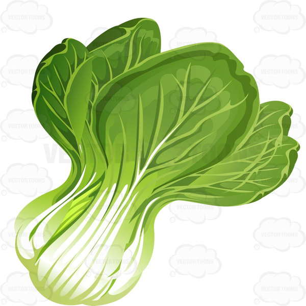 Free Lettuce Cliparts, Download Free Clip Art, Free Clip Art on Clipart  Library