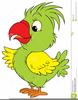 Funny Parrots Free Clipart Image