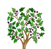 Fig Tree Drawing Image