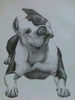 Pitbull Drawings Images Image