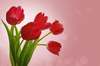 Background With Tulips Image