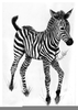 Baby Zebra Drawing Image