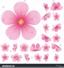 Clipart Japanese Cherry Blossom Image