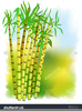 Free Sugar Cane Clipart Image