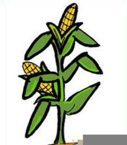 cornstalk clipart free free images at clker com vector clip art rh clker com fall corn stalk clipart corn stalk clipart free 1200 x 1200