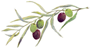 Olive Branch Graphic Image