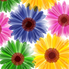 Free Daisy Flower Clipart Image