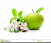 Green Apple Clipart Free Image