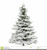 Christmas Tree With Snow Clipart Image