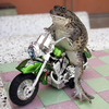 Bike Riding Frog Image