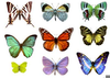 Free Clipart Butterfly Cocoon Image