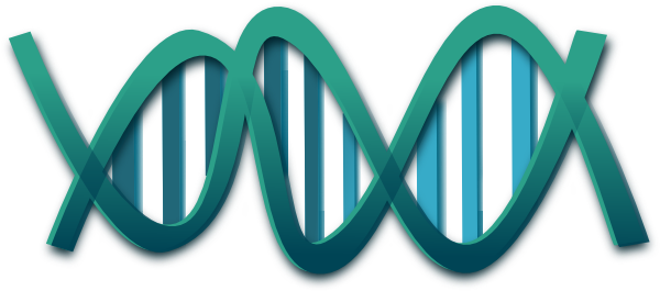 Dna Clip Art at Clker.com - vector clip art online, royalty free ...