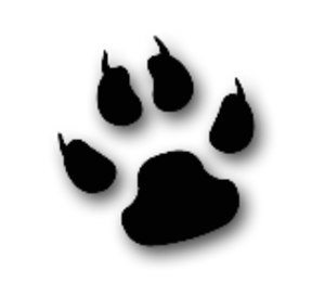 Cool Cat Animal Paw Image