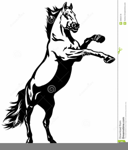 mustang wild horse clipart free images at clker com vector clip rh clker com mustang horse clipart images mustang horse clip art free