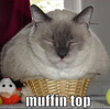 Muffin Top Cat Image