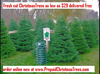 Christmas Trees Salt Lake City Image