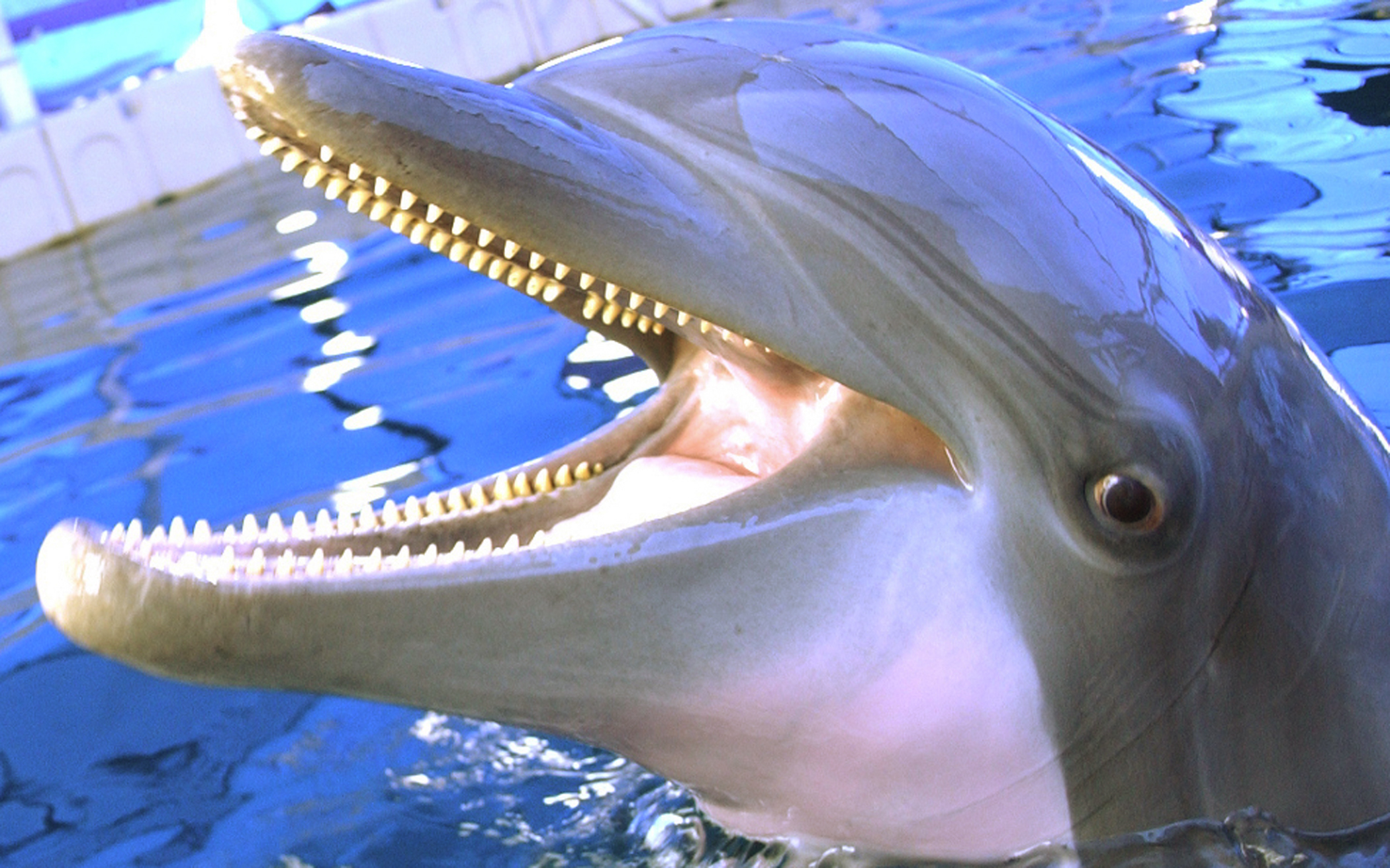 Smiling Dolphin | Free Images at Clker.com - vector clip art ...