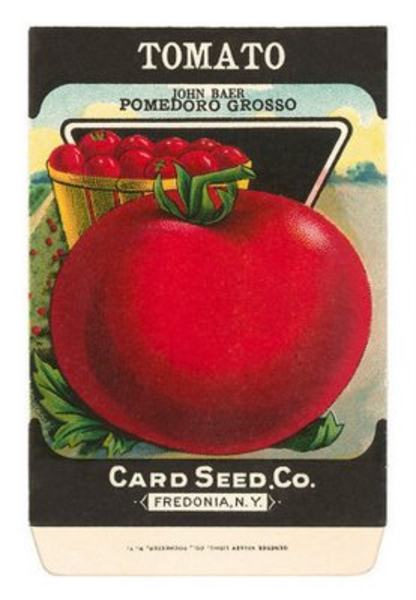 Seeds Clipart Tomato Seed Image Clipart