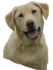 Yellowlab Image