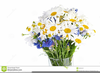 Free Clipart Daisy Bouquet Image